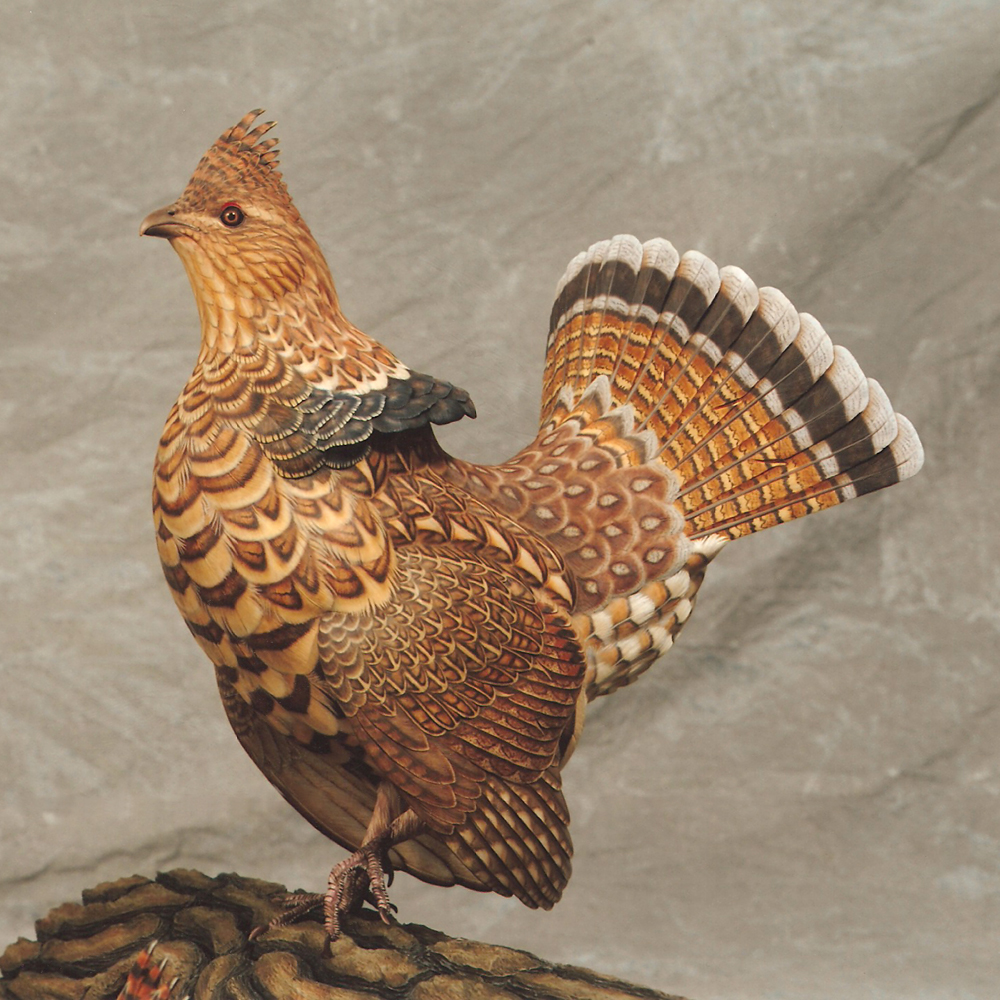 how to clean ruffed grouse